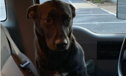 West Shore Regional Police say dog looking for missing owner