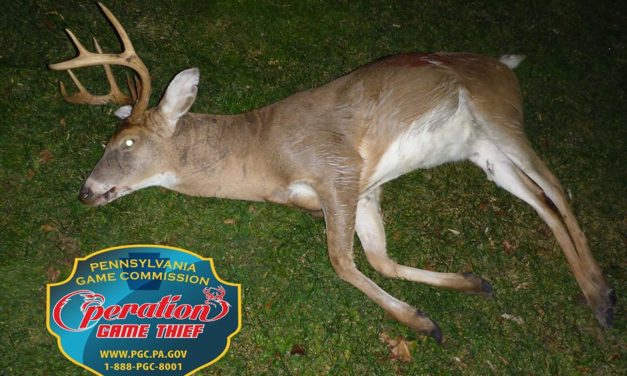 Game Commission looking for poacher who killed 8 point buck