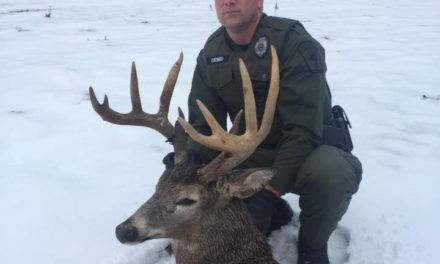 Game Wardens say illegal hunting costs in Pennsylvania