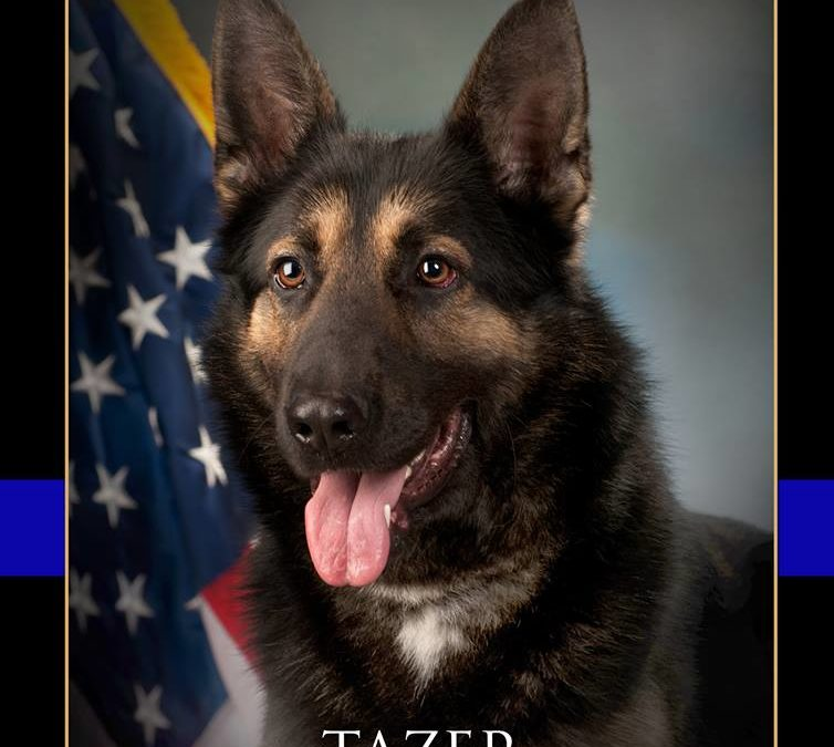 Newberry Township Police says goodbye to canine officer Tazer