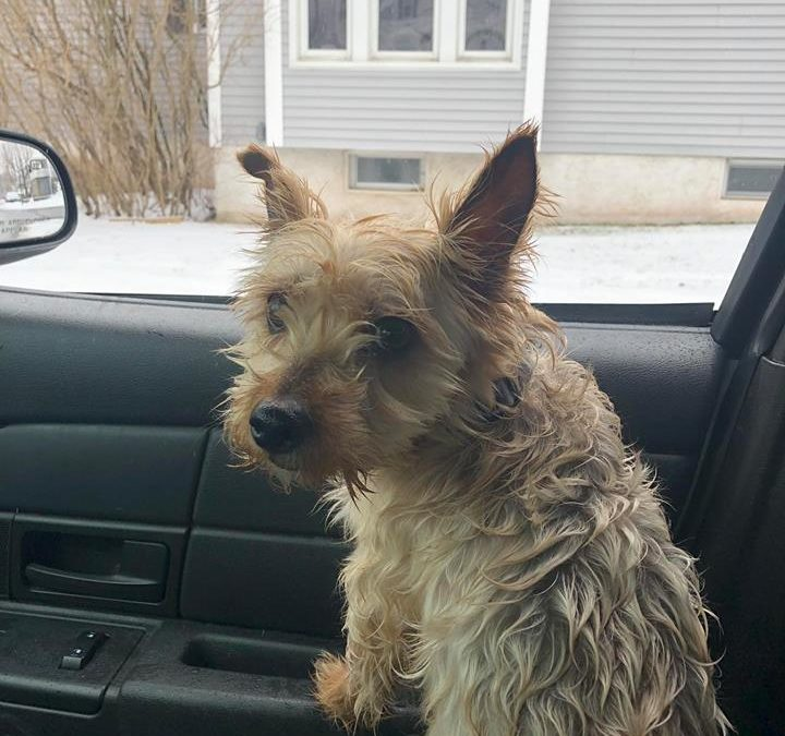 Jermyn Police: Dog looking for missing owner