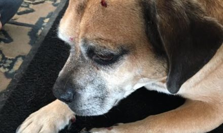 Ephrata Police looking for injured dog owner after house to house search