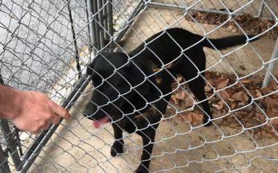 Ephrata Police want to reunite found dog with owner