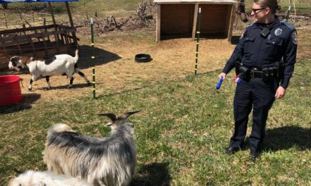 Northeastern Regional Police officer got the goats!