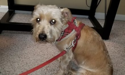 West Shore Regional Police find dog, now looking for owner