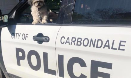 Carbondale Police hope to reunite dog with missing owner