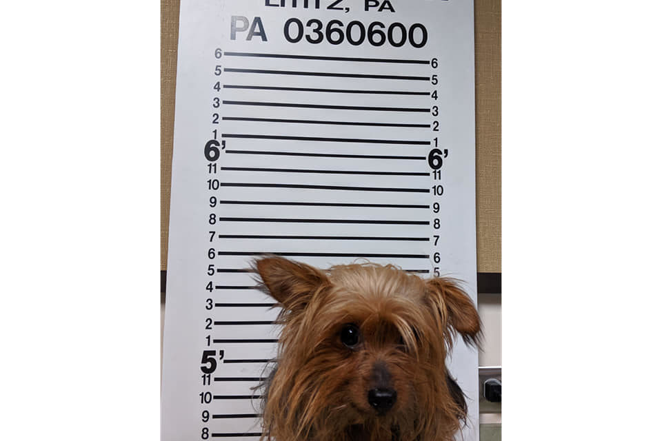 Lititz Police get no where interrogating, um, suspect, looking for someone who can help identify hairy hombre
