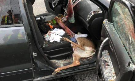 PA Turnpike accidents leaves deer dead inside car, 3 occupants safe, driver suffers minor injury
