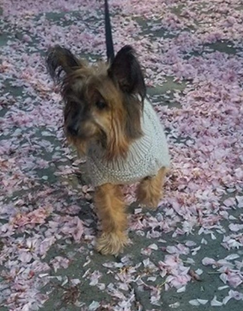 Upper Allen Township Police on the lookout for missing pooch