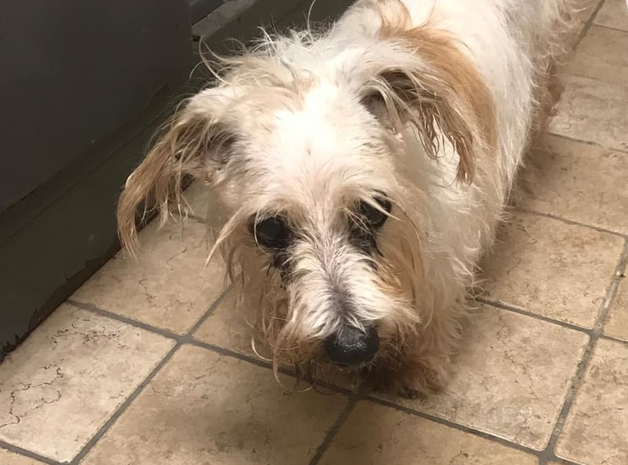 Dunmore Police find dog, now looking to reunite with family