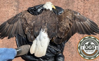 Game Commission looking for information related to Wayne County bald eagle deaths